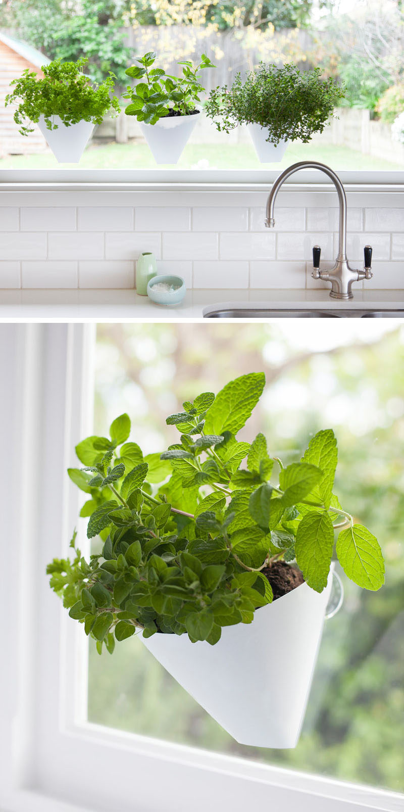 Indoor garden idea hang your plants from the ceiling walls - How to hang plants in front of windows ...