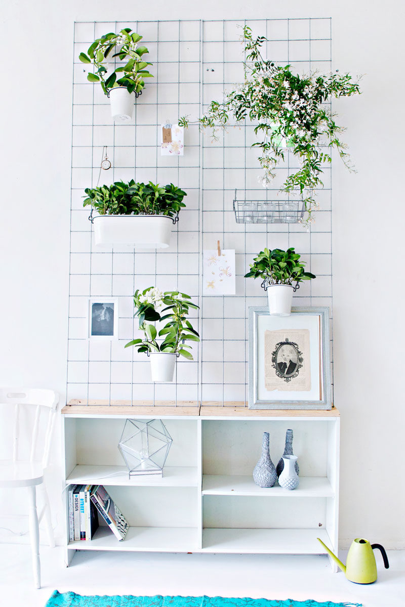 Indoor garden idea hang your plants from the ceiling walls - Things to put on a wall ...