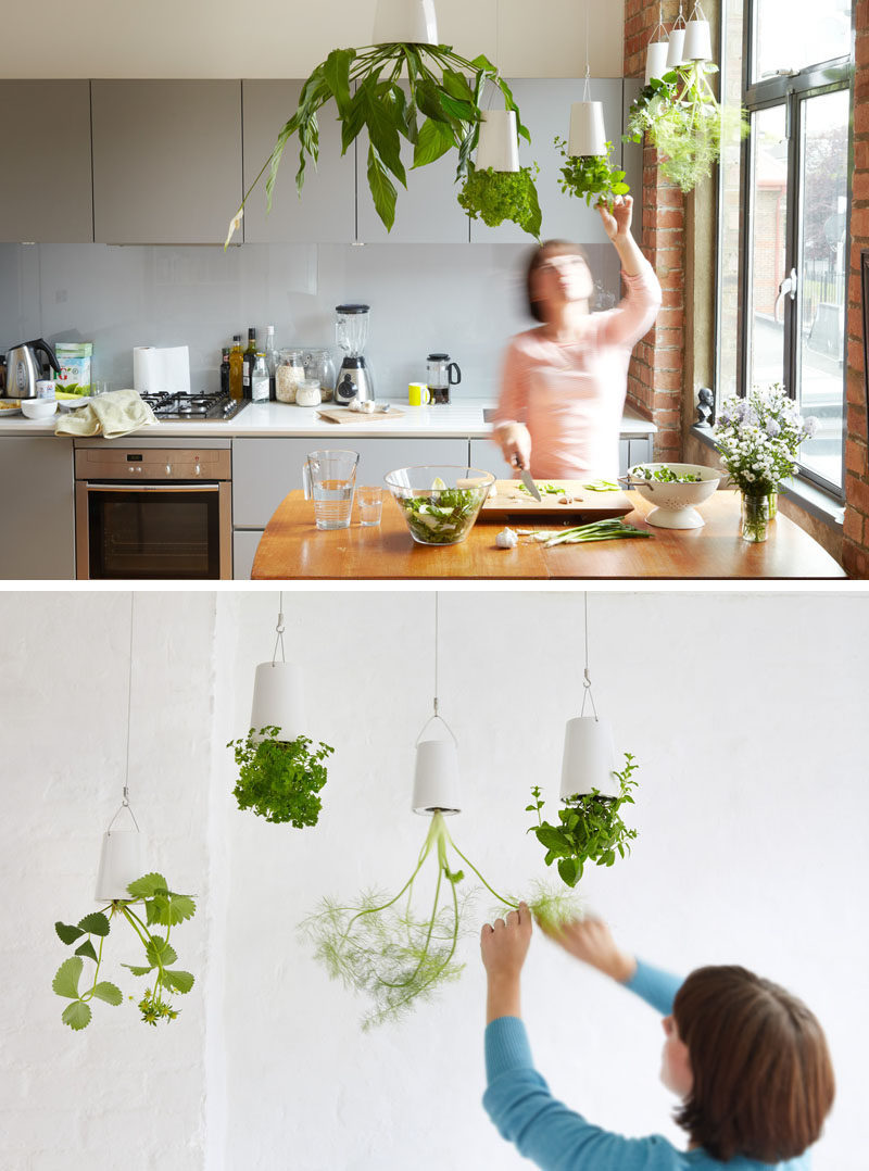 Picture Hanging Ideas Indoor Garden Idea  Hang Your Plants From The Ceiling & Walls