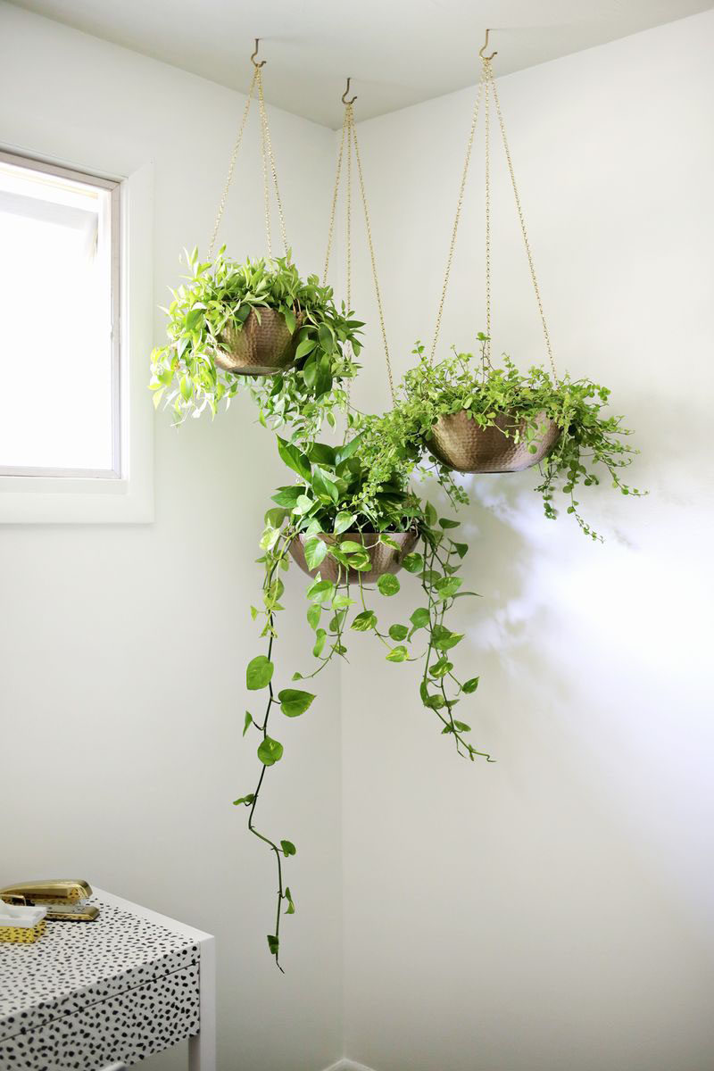 Indoor garden idea hang your plants from the ceiling for Indoor greenery ideas