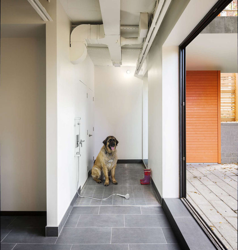 5 Benefits Of Having A Dog Wash Station In Your Home // There's more space for your dog to feel comfortable, especially if you have a large dog.