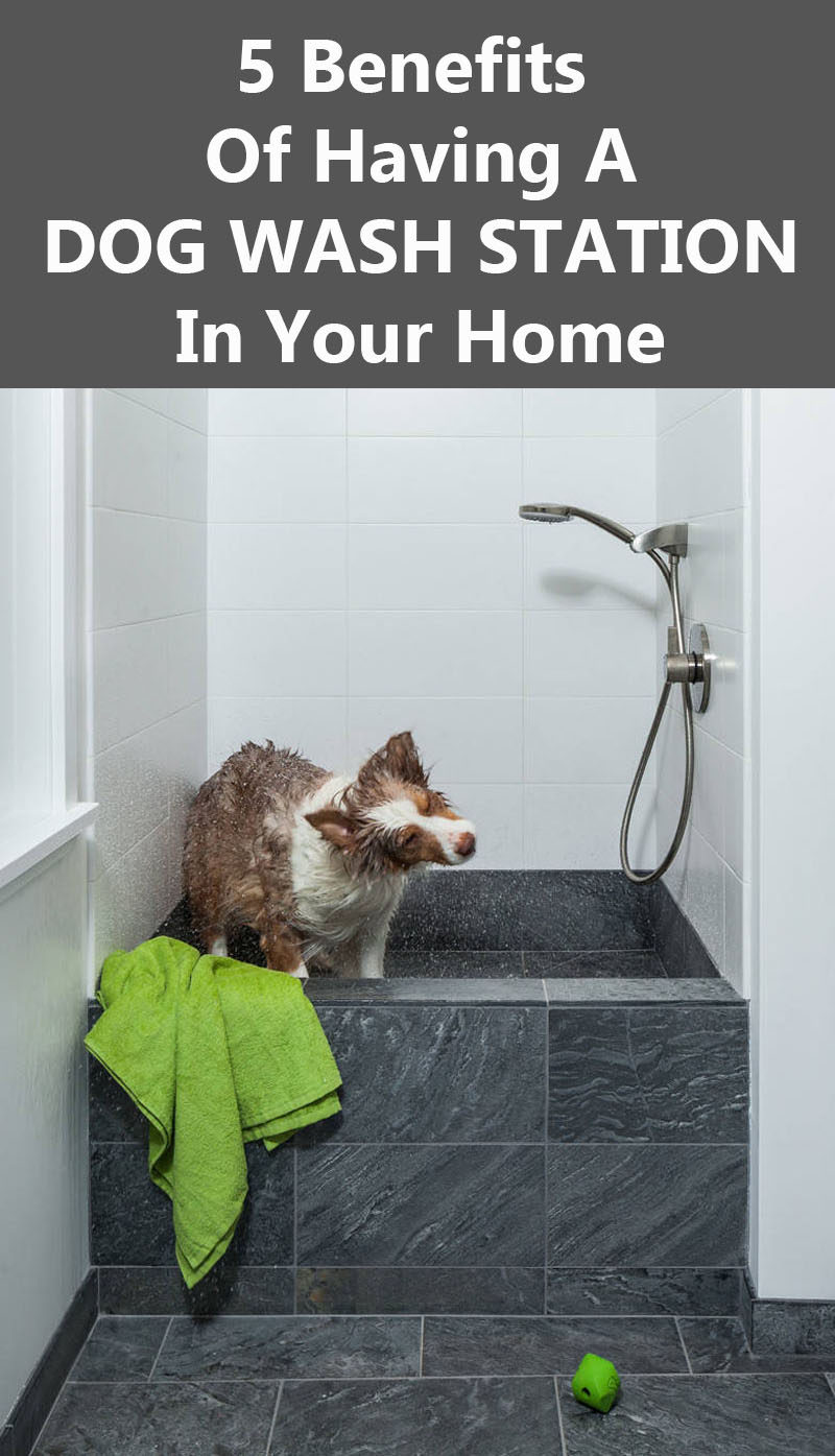 5 Benefits Of Having A Dog Wash Station In Your Home