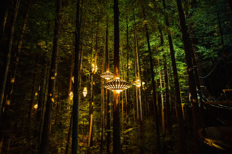 Sculptural Lights By David Trubridge Have Been Added To A Treewalk In New Zealand