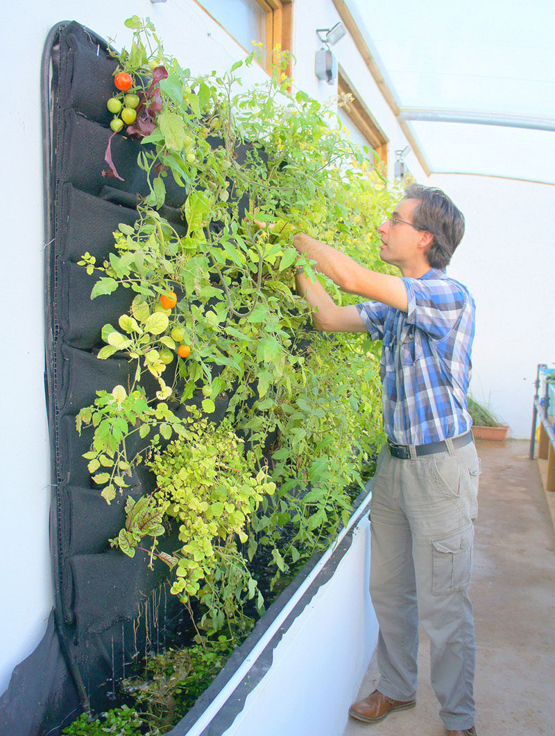 5 vertical vegetable garden ideas for beginners contemporist for Vertical garden wall systems