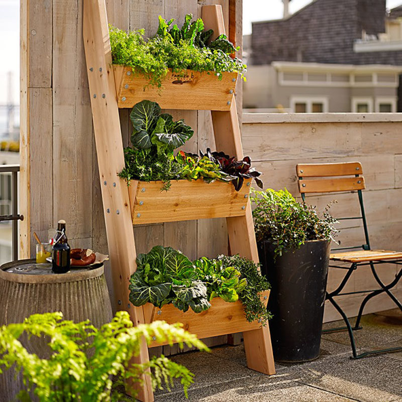 5 Vertical Vegetable Garden Ideas For Beginners / A vegetable ladder is another great option for creating a vertical garden, especially when space is limited. They're easy to water, maintain, and harvest and they add a stylish touch to your balcony or back yard.