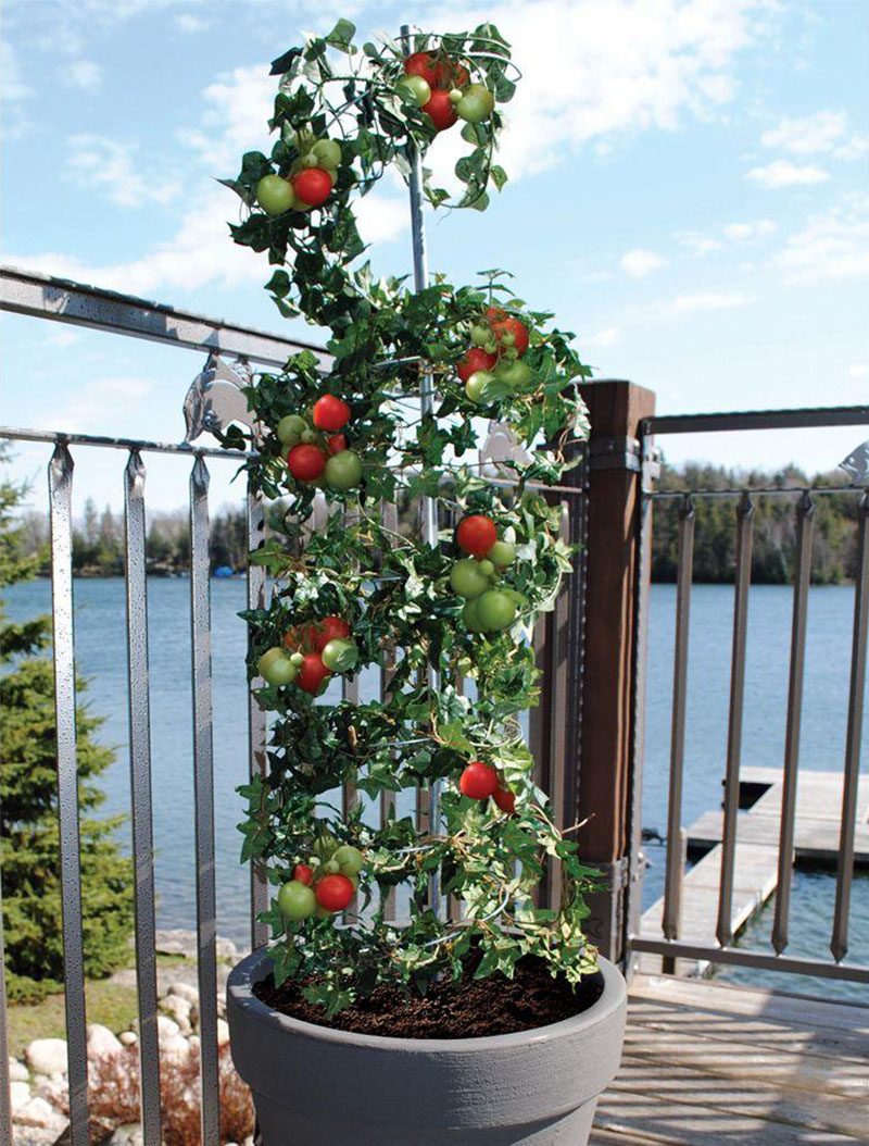 5 Vertical Vegetable Garden Ideas For Beginners / Encourage your vine like tomatoes and beans to grow tall and strong with a growing frame that gives them support.