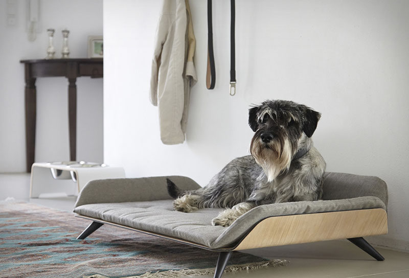 Designer Gerd Couckhuy Has Created The Letto Daybed A Stylish And Modern Dog Bed Made