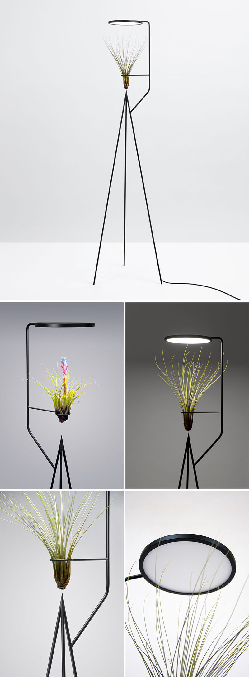 The sculptural form of this matte black air plant holder, allows it to have the LED light positioned directly above the plant, and therefore highlights the design of the plant in a minimalist way.