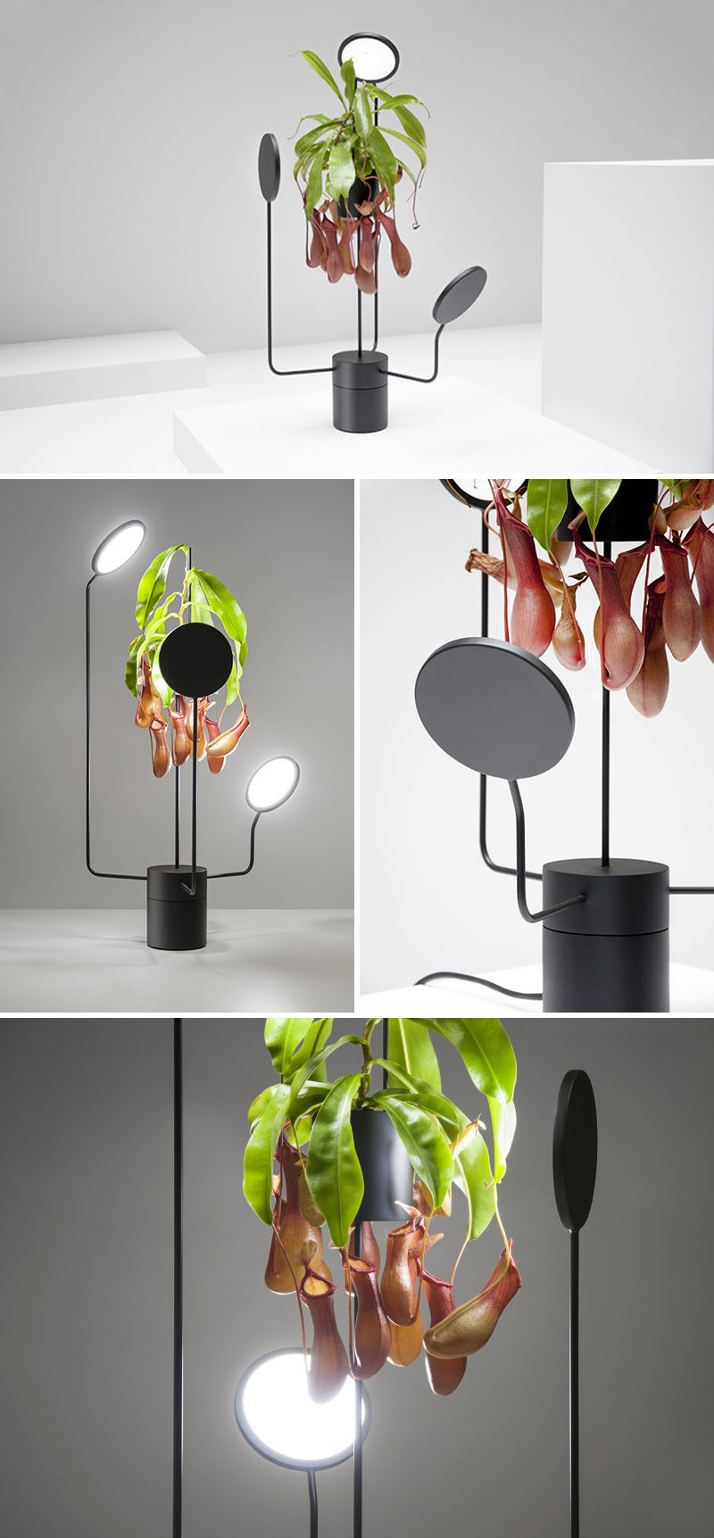 This minimalist and sculptural matte black planter has a flower pot on a pedestal, has lights that slowly rotate around the plant, providing an even distribution of light to the plant.