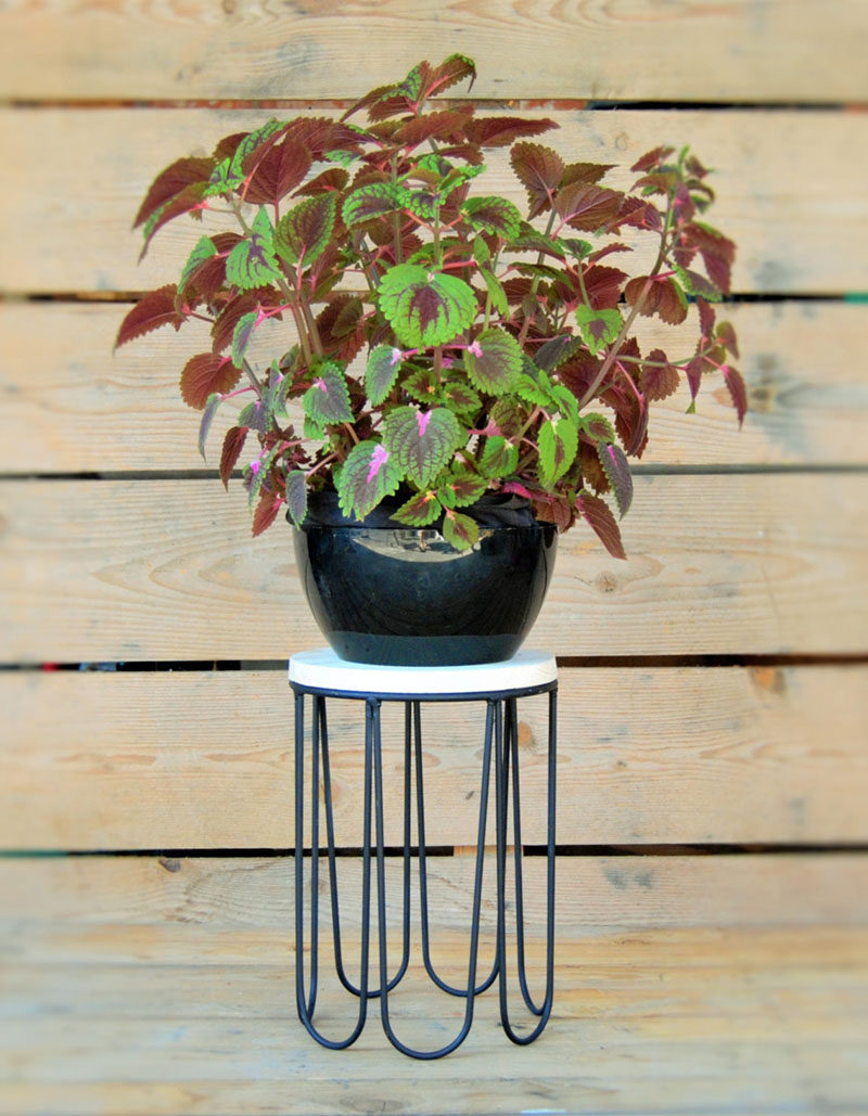 The feet of this black iron plant stand are uniquely rounded creating a modern design. A pot can be put on the natural pine wood platform, or placed directly inside the stand.