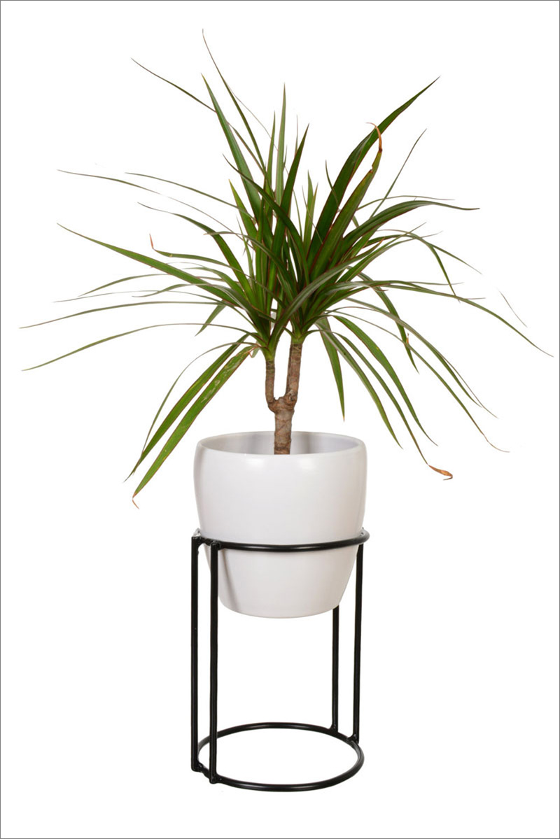 Circular in shape, this modern black steel plant stand is suitable for both indoors and outdoors.