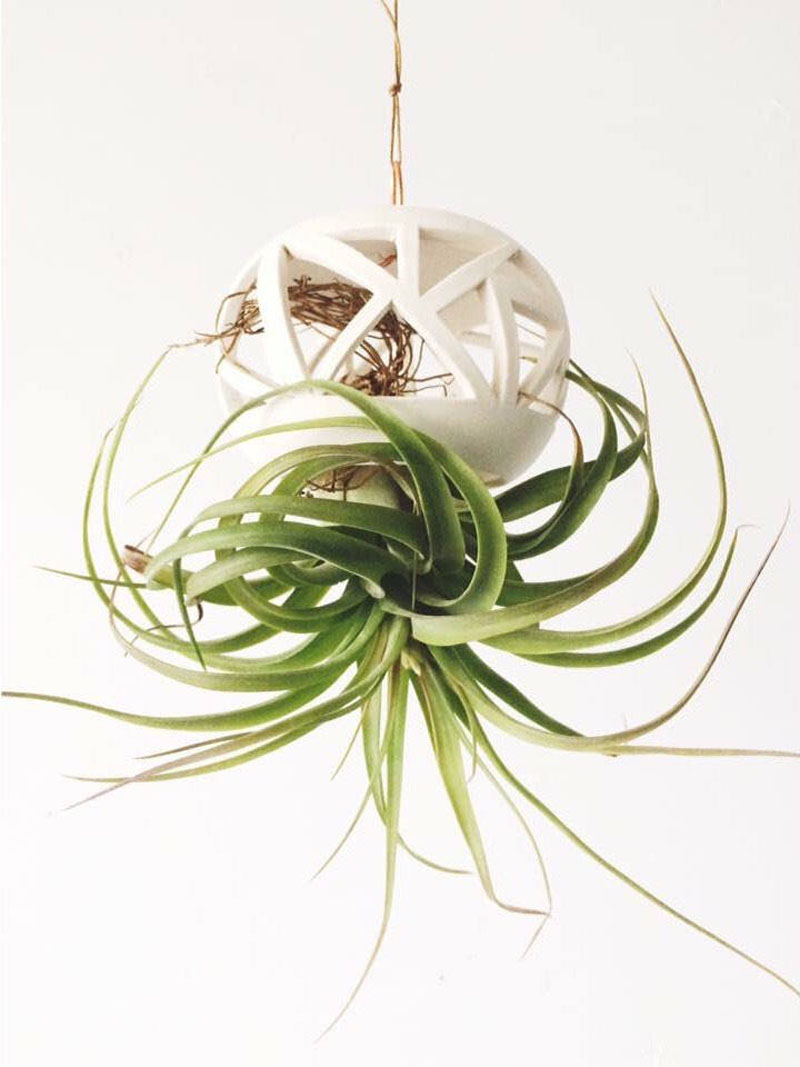 Hand spun on a pottery wheel, this white ceramic planter is inspired by the graphic patterns of Art Deco, and is designed for orchids and hanging air plants.