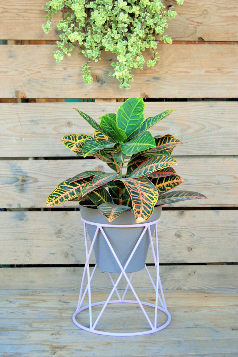 Short and sweet, this modern purple plant stand is delicate but also strong enough to support large plants.