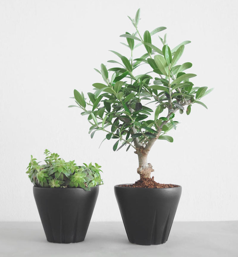 Ideal for small trees or sprawling succulents, these modern ceramic, matte black planters will suit any home decor style.