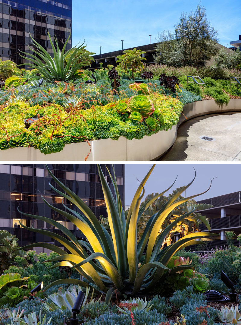 A variety of plants have been used in this modern garden. Textural foliage and large-scaled plants, such as agaves have been supplemented with succulents and other shade loving plants. At night, specific plants are highlighted with uplighting.