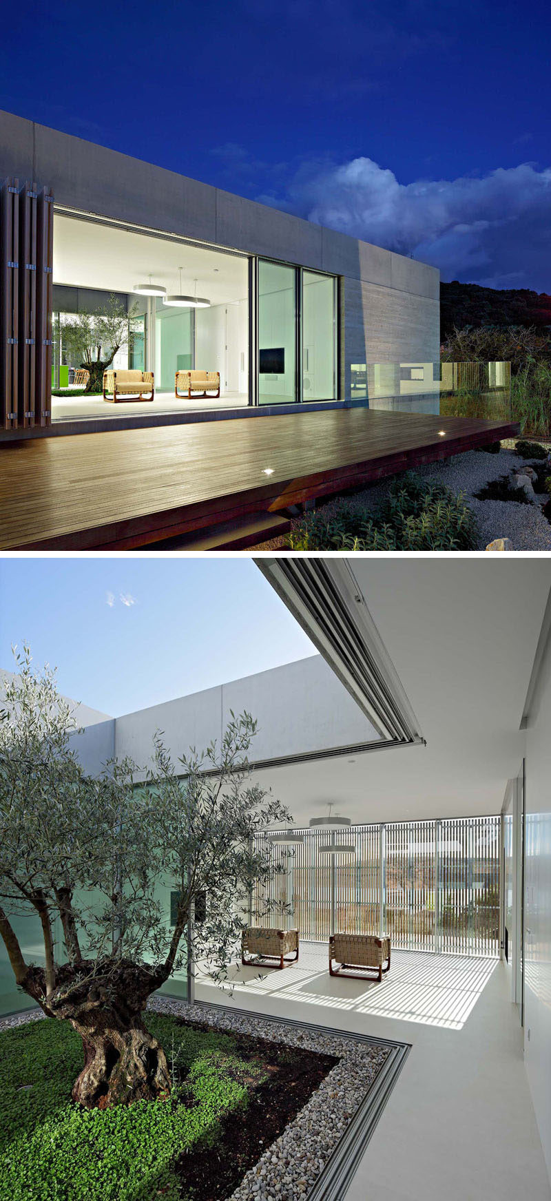 This minimalist living room opens to a deck that overlooks the garden, while behind it is an atrium with a single olive tree. #Atrium #Architecture #LivingRoom #ModernHouse
