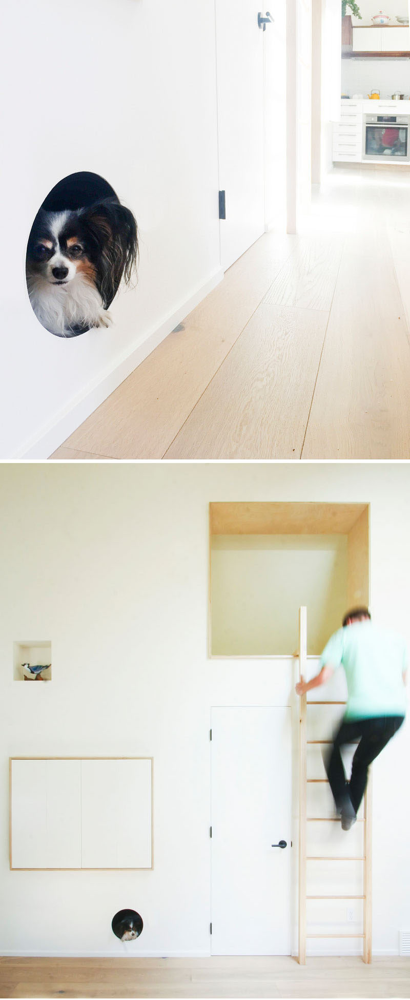 A Built-In Dog Bed Was Created In This Living Room Wall