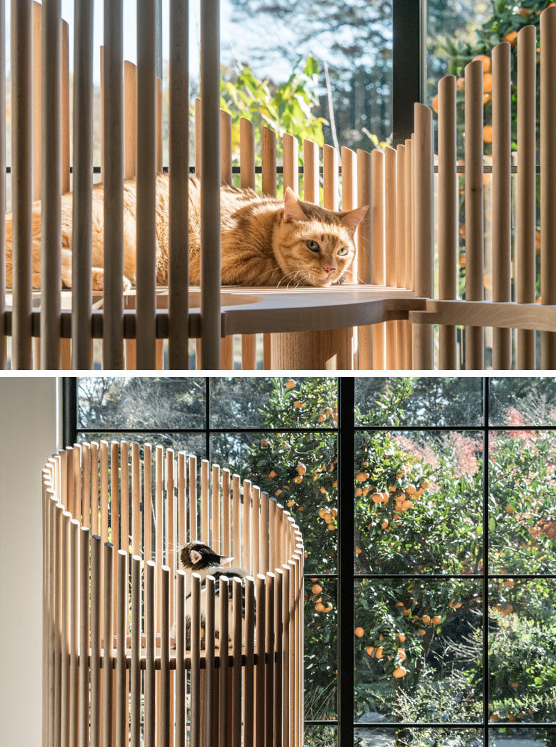 Designer Yoh Komiyama has designed NEKO, a modern cat tree that offers a natural wood home for the family pet that also fits in with a modern interior. #PetFurniture #Cats #CatTree #ModernCatTree