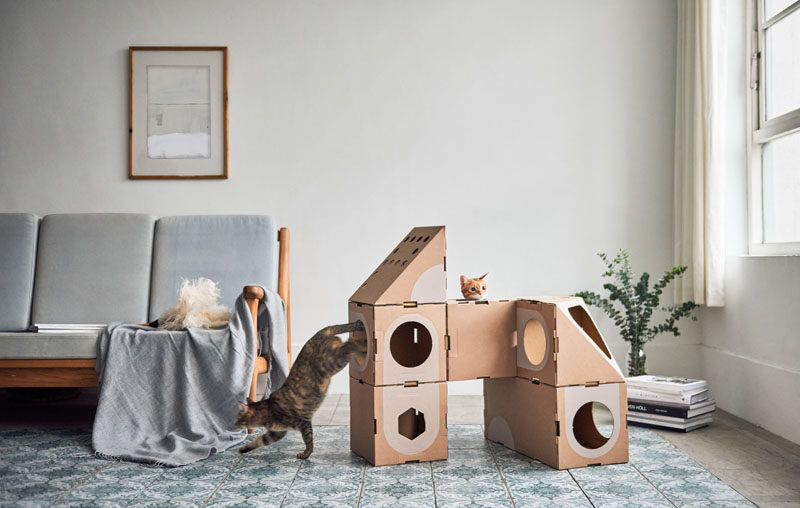 Cat Rooms In Houses