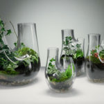 PLANT By Tom Dixon Can Be Used As A Vase Or A Terrarium