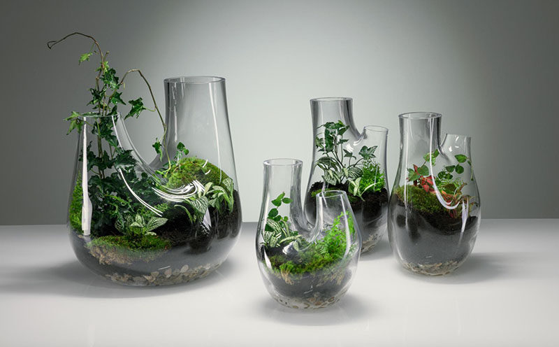 Tom Dixon has designed PLANT, a double headed abstract vase that can also be used as a terrarium. #GlassVase #Terrarium #ModernDecor