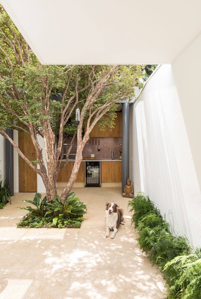 This modern house has a small a courtyard with trees and small plants, as well as an outdoor kitchen. #Courtyard #OutdoorKitchen