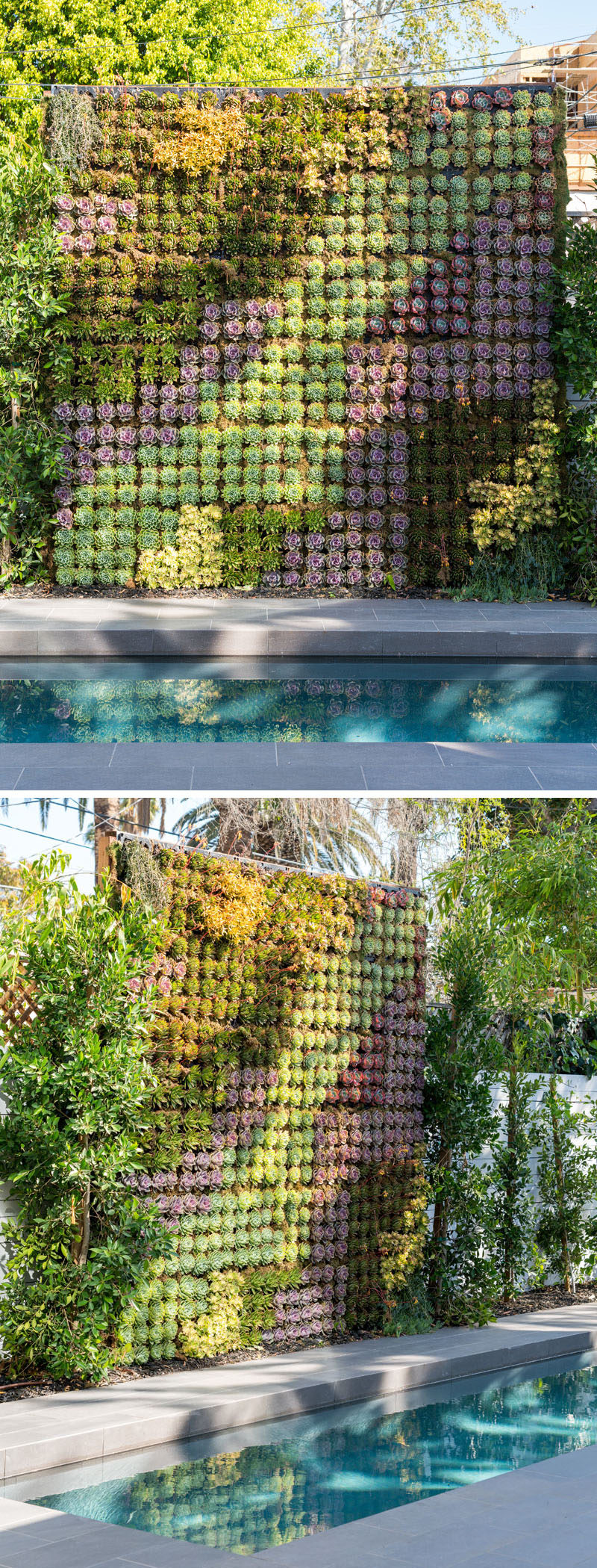 On the wall that runs alongside this modern swimming pool is a patterned green wall that's filled with succulents. #GreenWall #Succulents #Garden