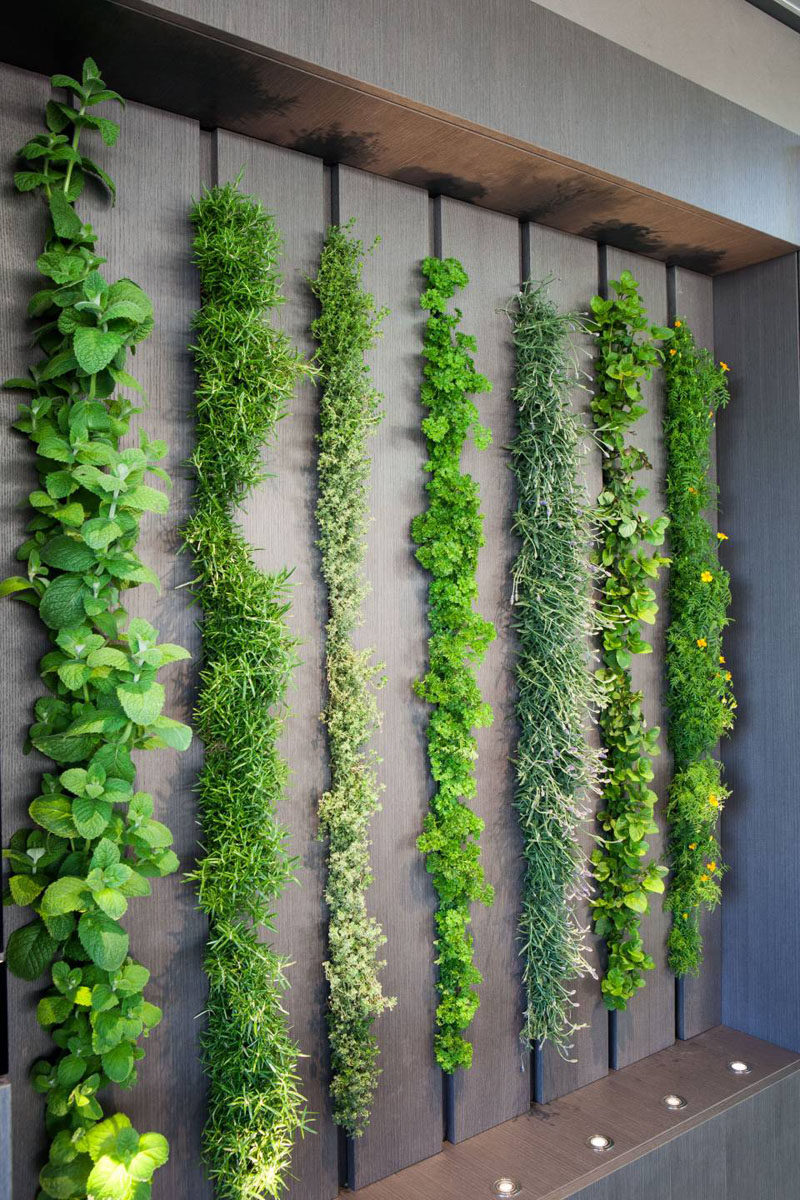 This living wall in a kitchen can be used as an indoor herb garden #LivingWall #HerbGarden #Kitchen