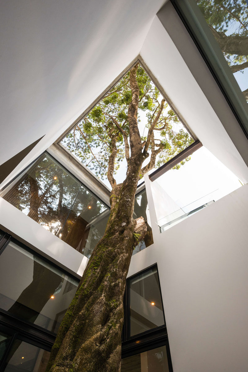 The architects designed this modern house around a tree that was original to the site. #Architecture #LightWell #Trees