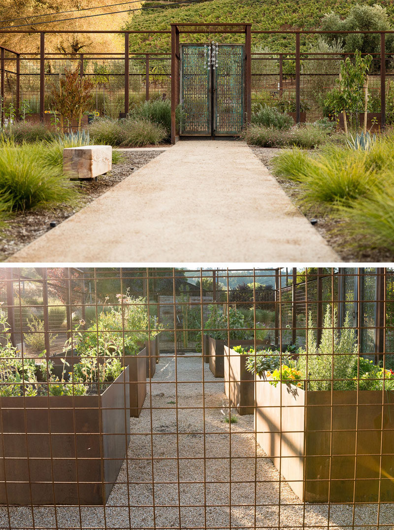 In this backyard, an open-top steel cage with a decorative doors, surrounds a herb and vegetable garden, that also features weathered steel raised planters. #HerbGarden #VegetableGarden #Landscaping #LandscapeDesign