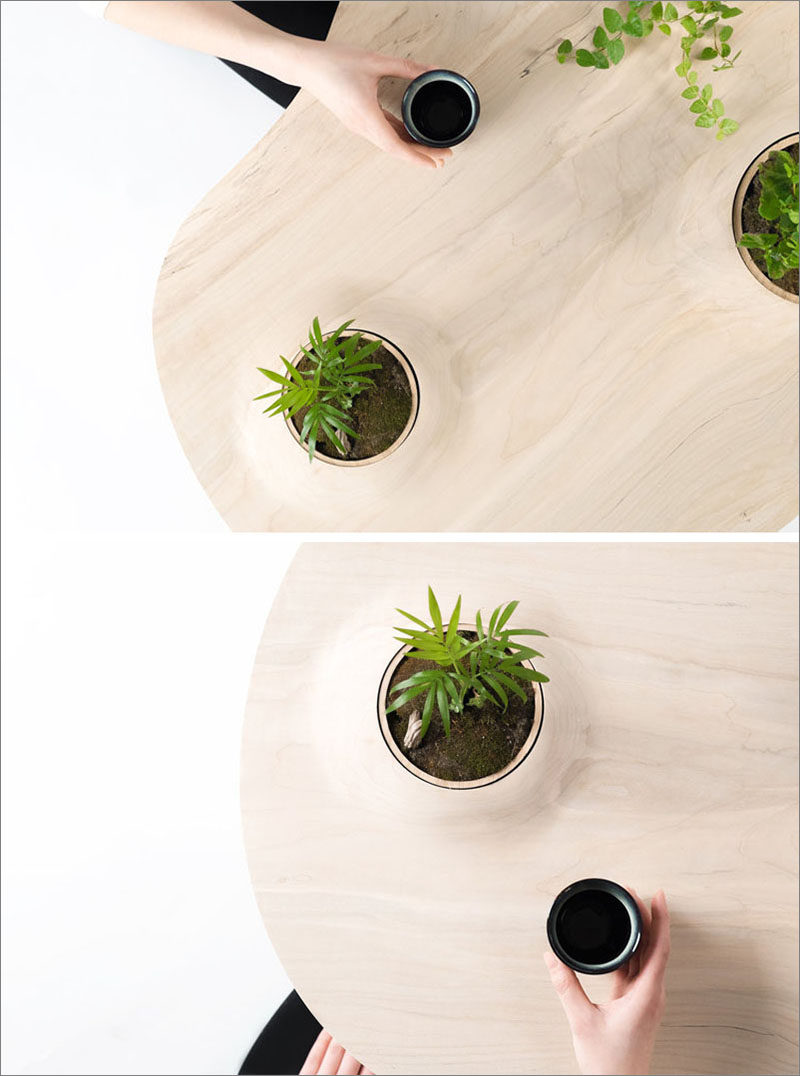 Toronto-based design studio Wooyoo, has created the Pokopoko Table, a modern wood table that has small pockets of green space. #ModernTable #CoffeeTable #Design #ModernFurniture