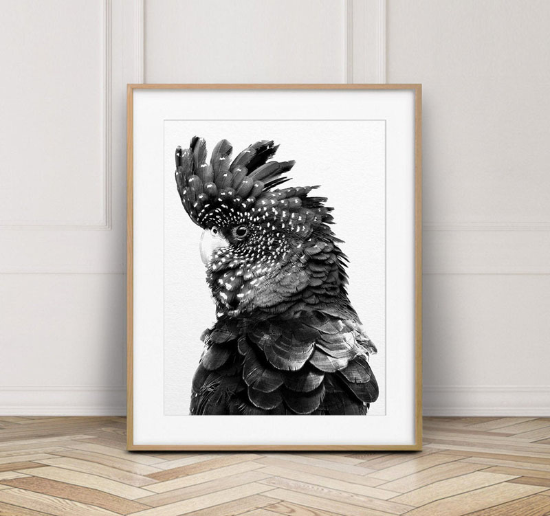 This black and white art print of a Black Cockatoo (an Australian bird), offers a way to add a touch of character to any room. #BirdWallArt #BirdArt #BirdHomeDecor #Birds