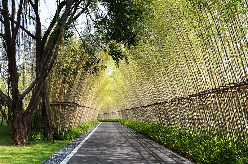The design of this garden is inspired by traditional Chinese gardens, however it has been reinterpreted into a more contemporary design language.  #Landscaping #GardenDesign #Bamboo