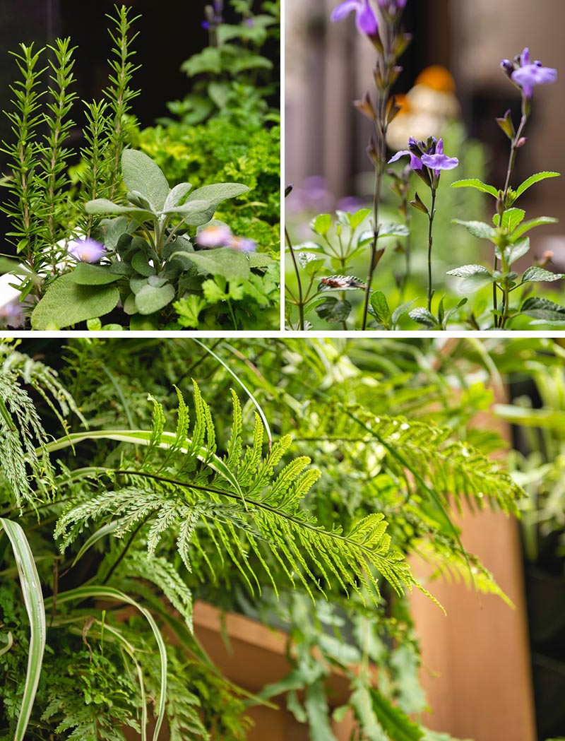 Edible herbs and flowering perennials provide a pop of color and an element of seasonal change. #Plants #Gardening #Garden