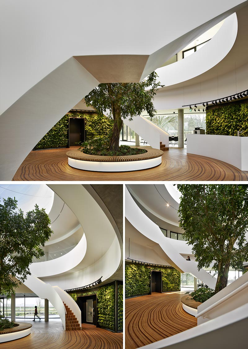 The wood floor of this office atrium has been designed to represent the growth-rings of a tree. #WoodFloor #FlooringIdeas #ArtisticFlooring #SculpturalFlooring #GreenWalls