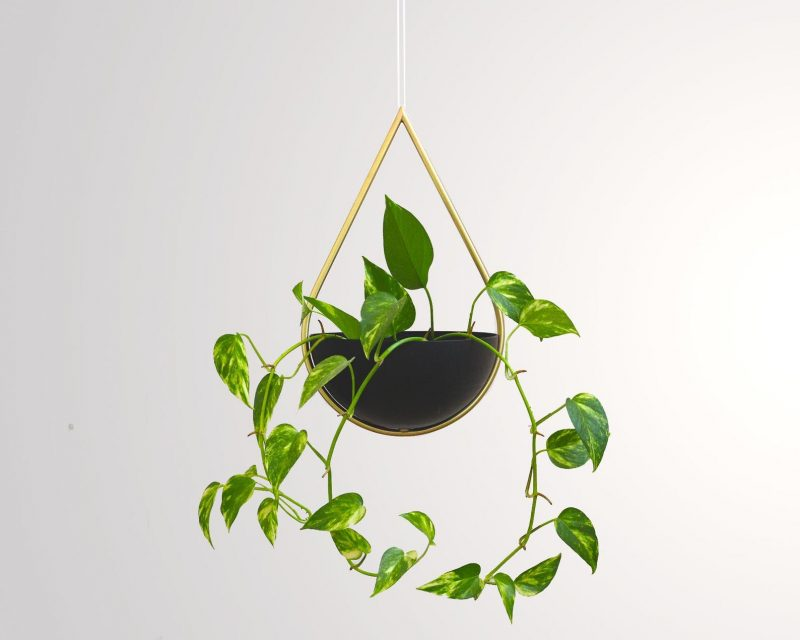 A modern teardrop shaped hanging planter with a brass frame and matte black bowl.
