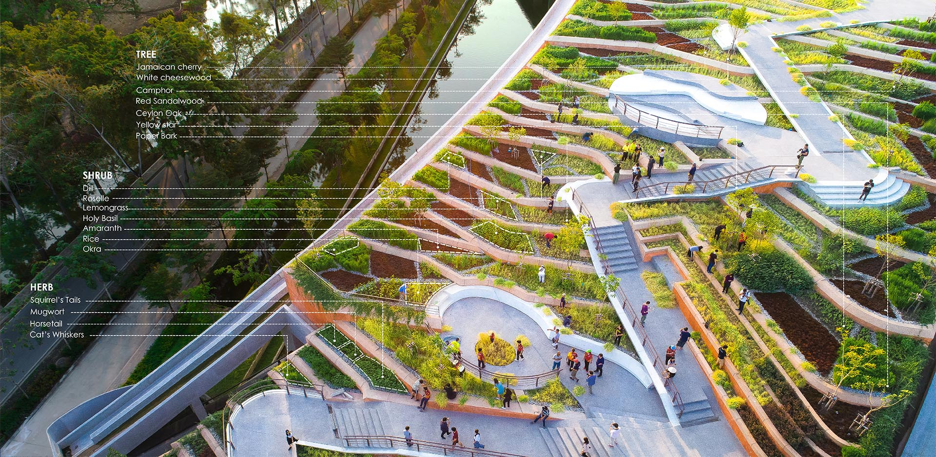 A terraced rooftop farm with herbs, shrubs, and trees, that grow food for students.