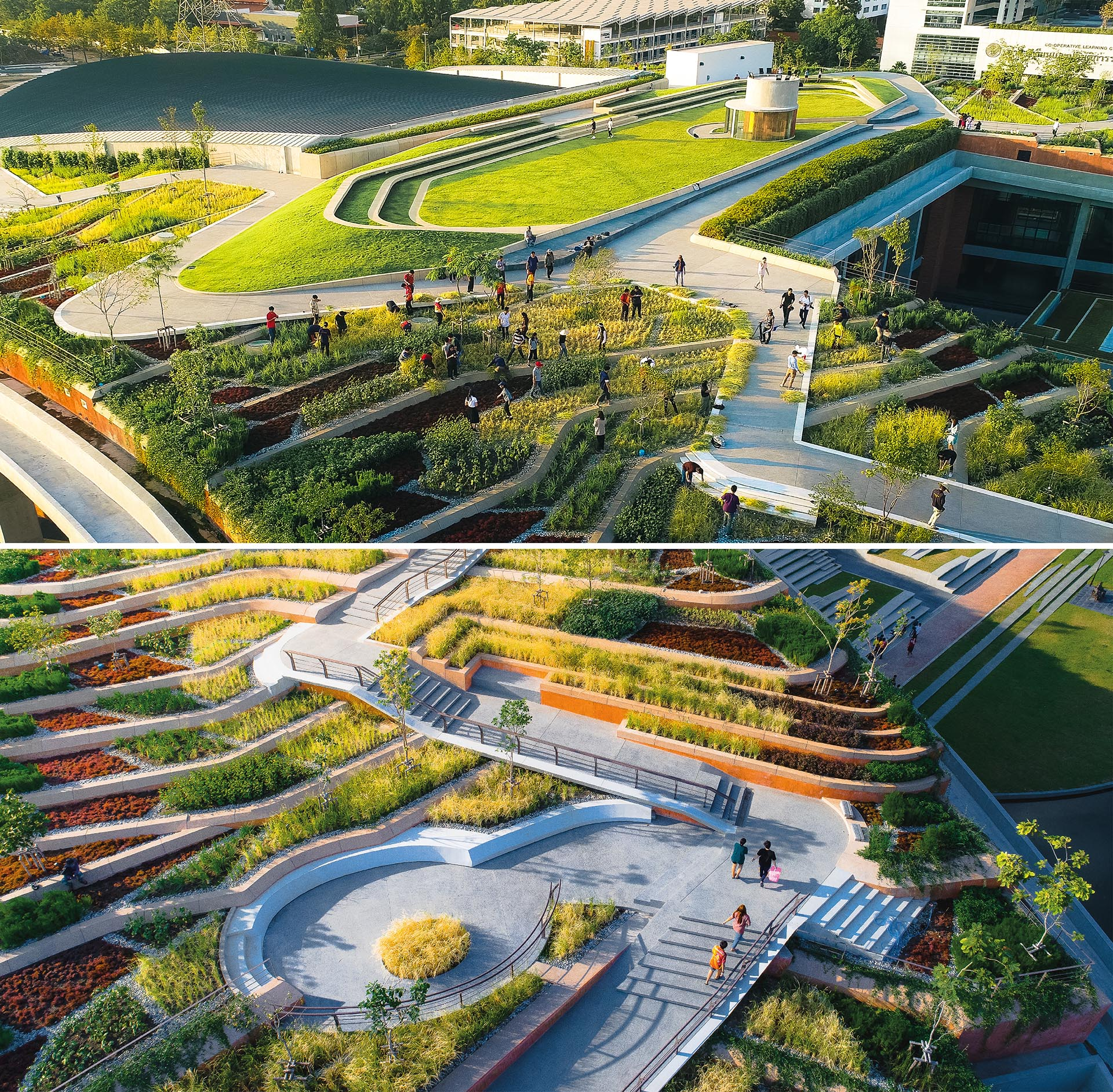 A terraced landscape creates an organic farm on an unused rooftop.