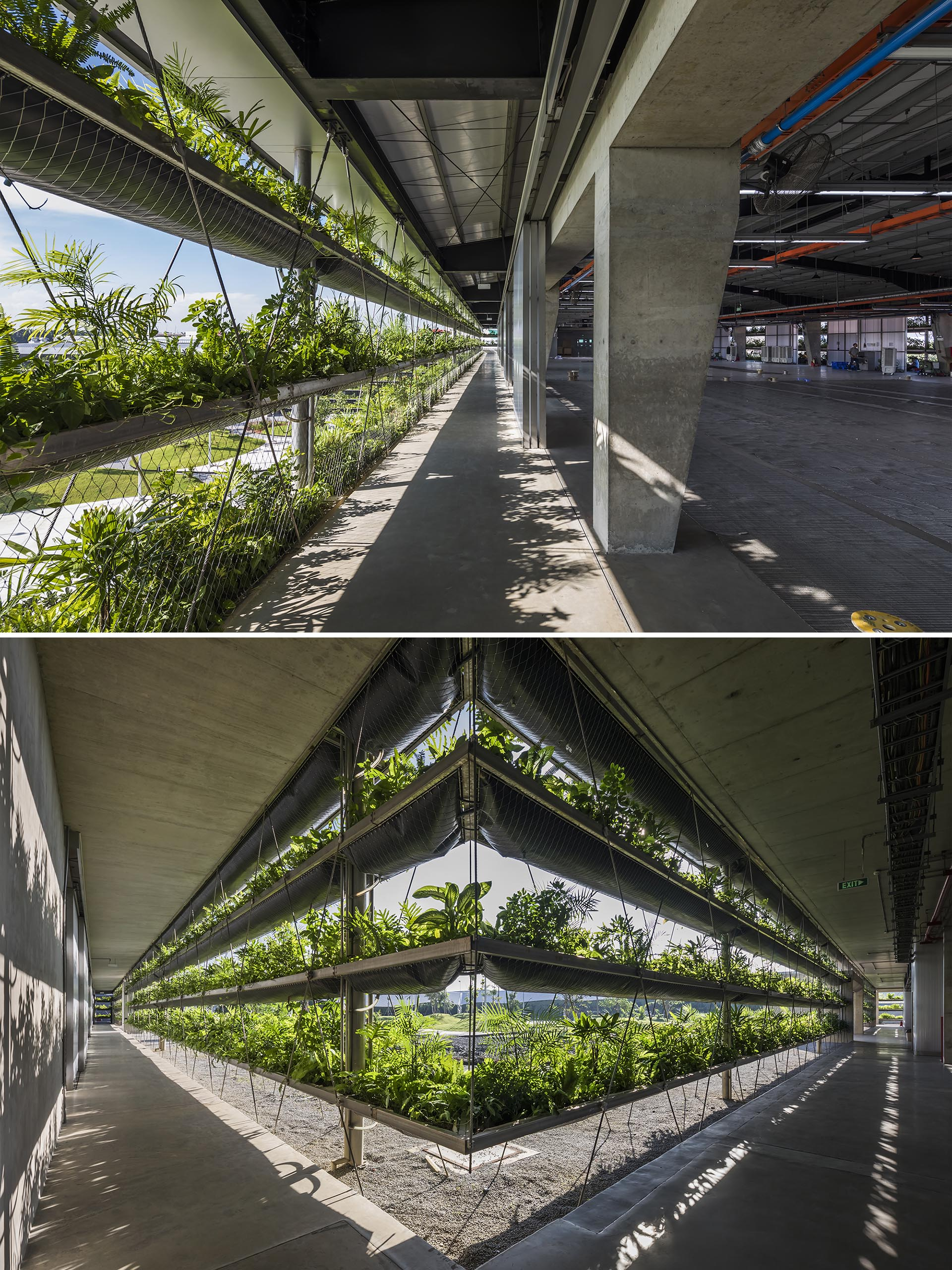 Rows of plants help with temperature and air quality inside a factory.