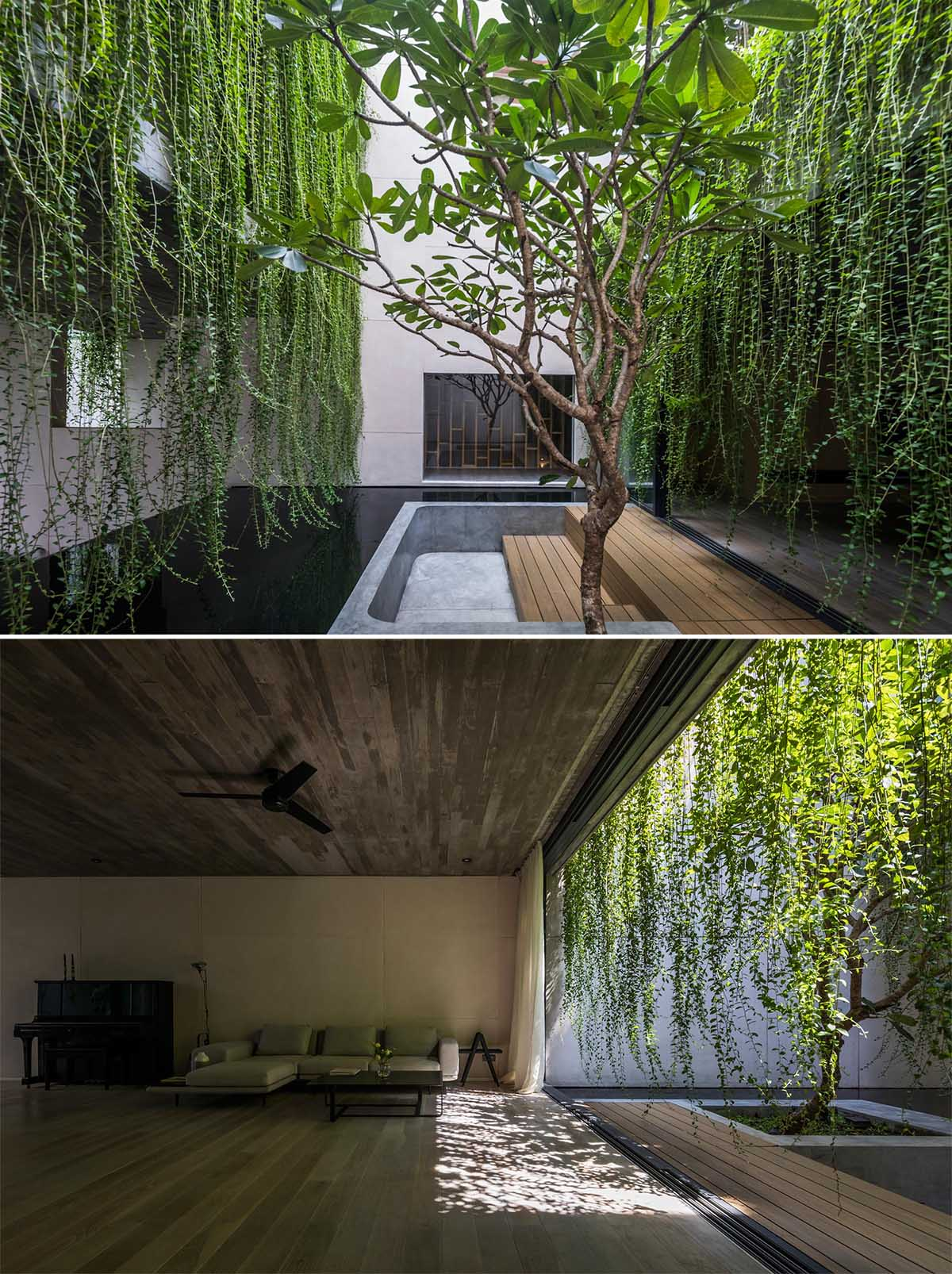 A modern house with overhanging plants.