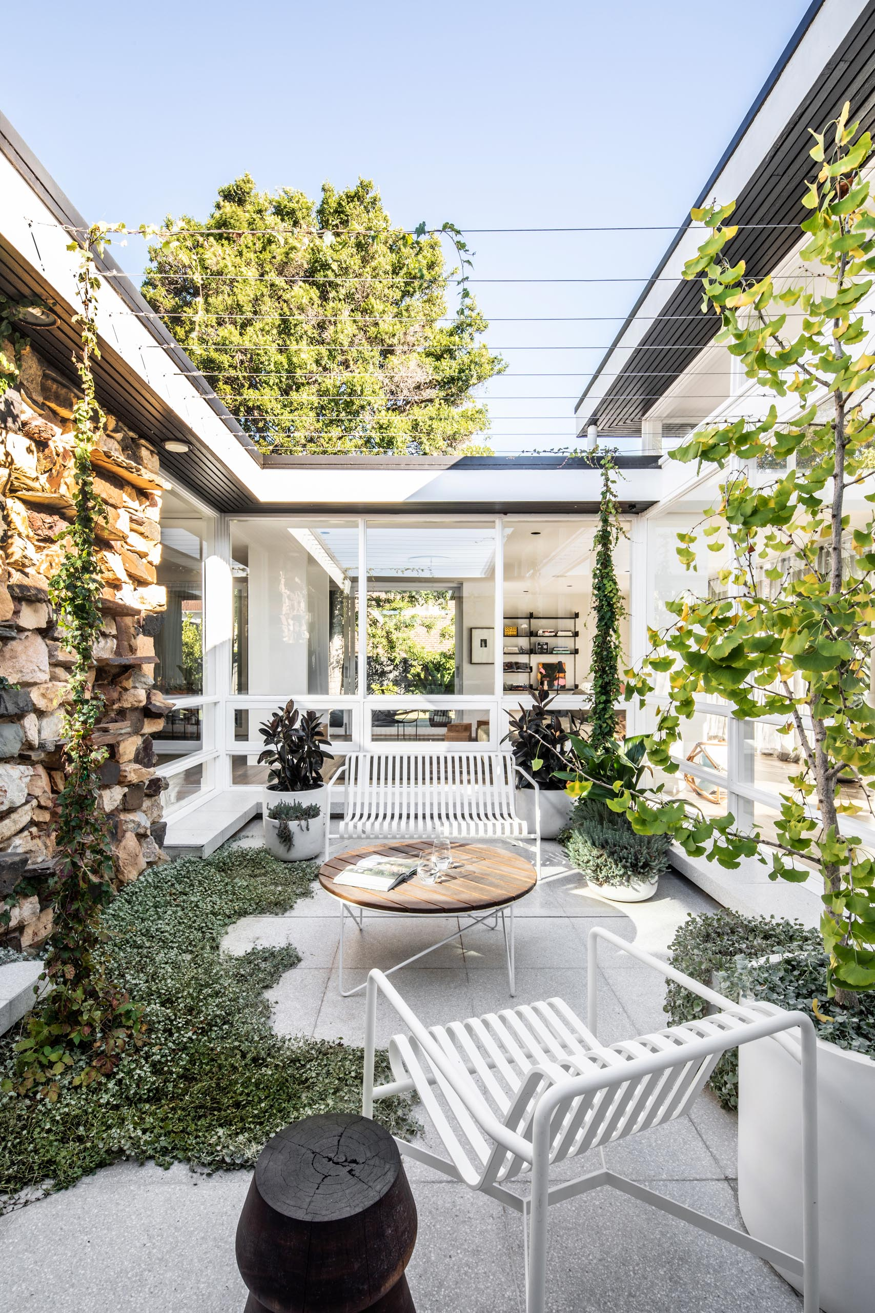 A central light-drenched courtyard has vines that will create a shaded outdoor space, furnished with planters and simple furniture.