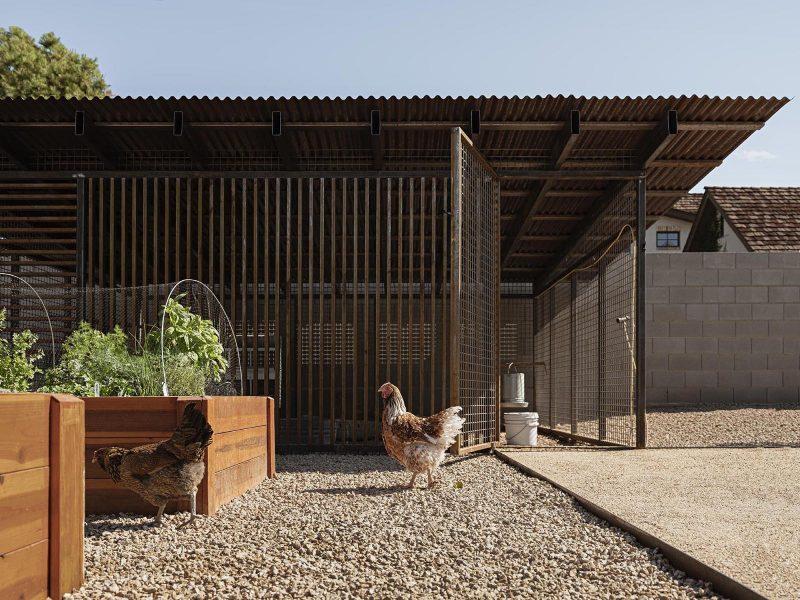 A modern desert home with a custom designed chicken coop.