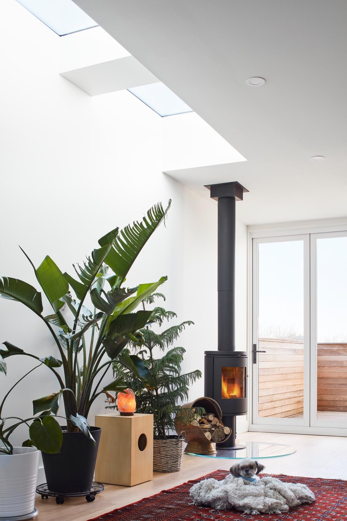A modern living room with plants, skylights, and a black fireplace.