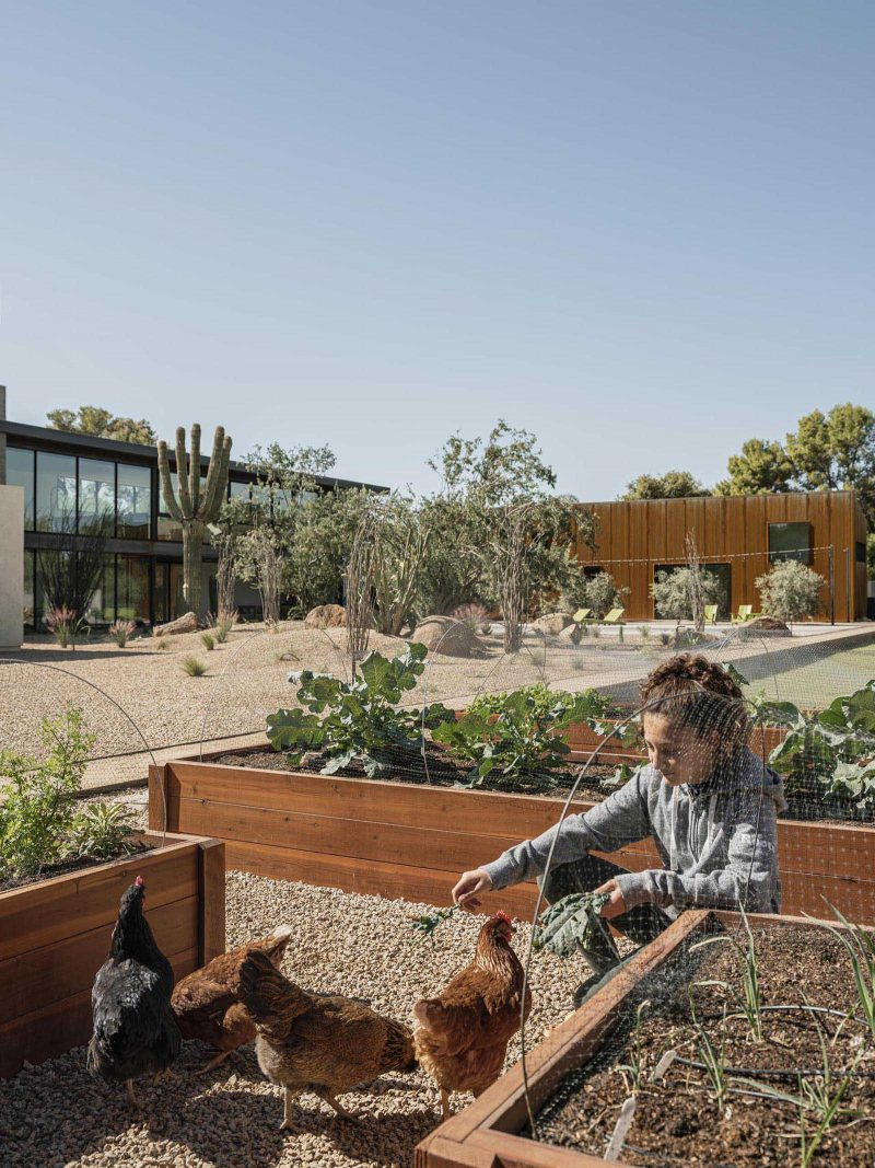 A modern desert home with raised vegetable planters.