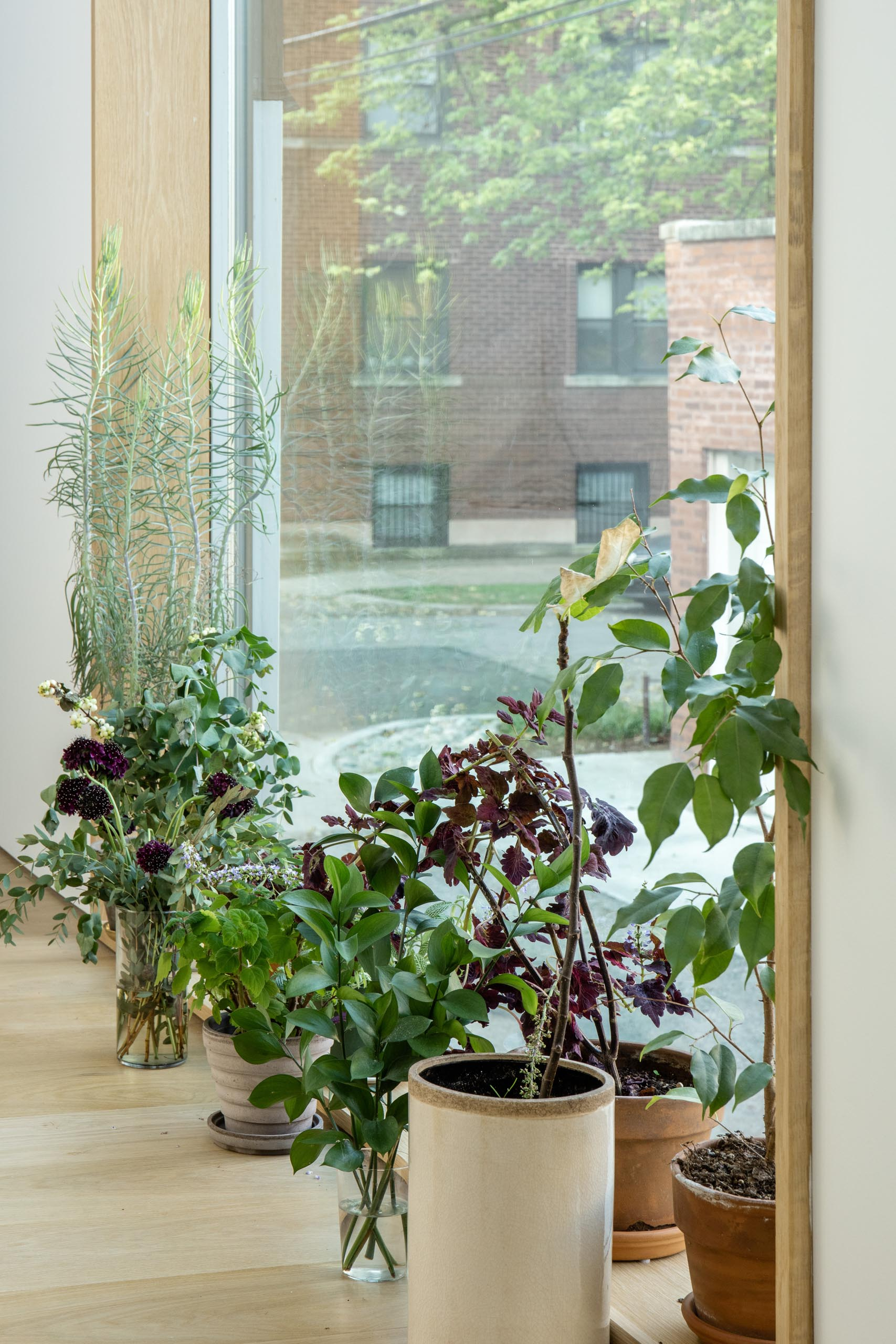 A wood framed window lined with plants.