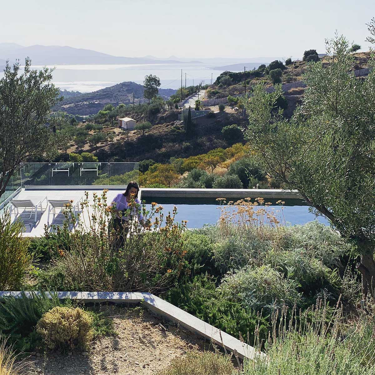 A modern house built into the hillside has a green roof to help it blend in.