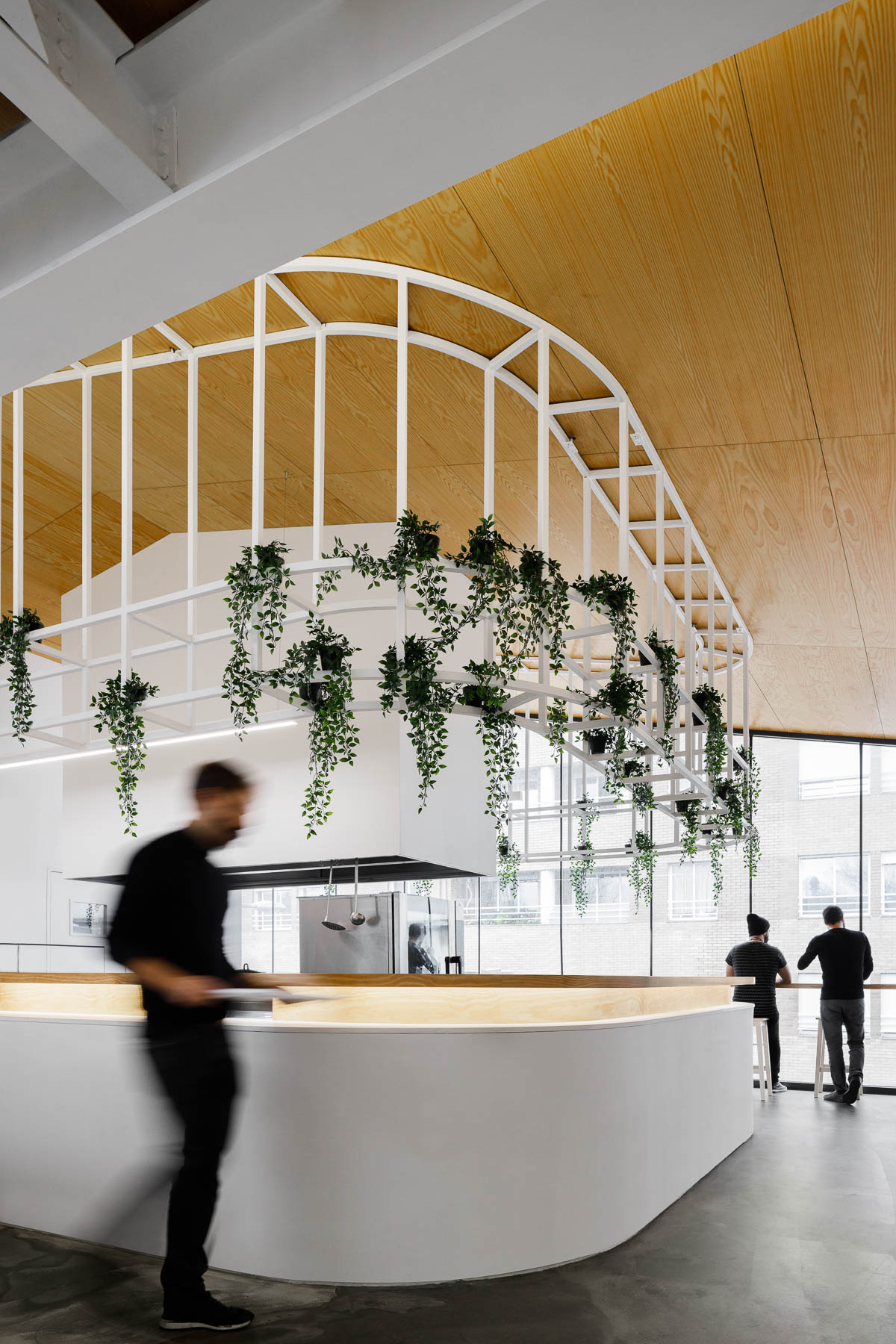 A modern office with plants that hang from a metal detail.